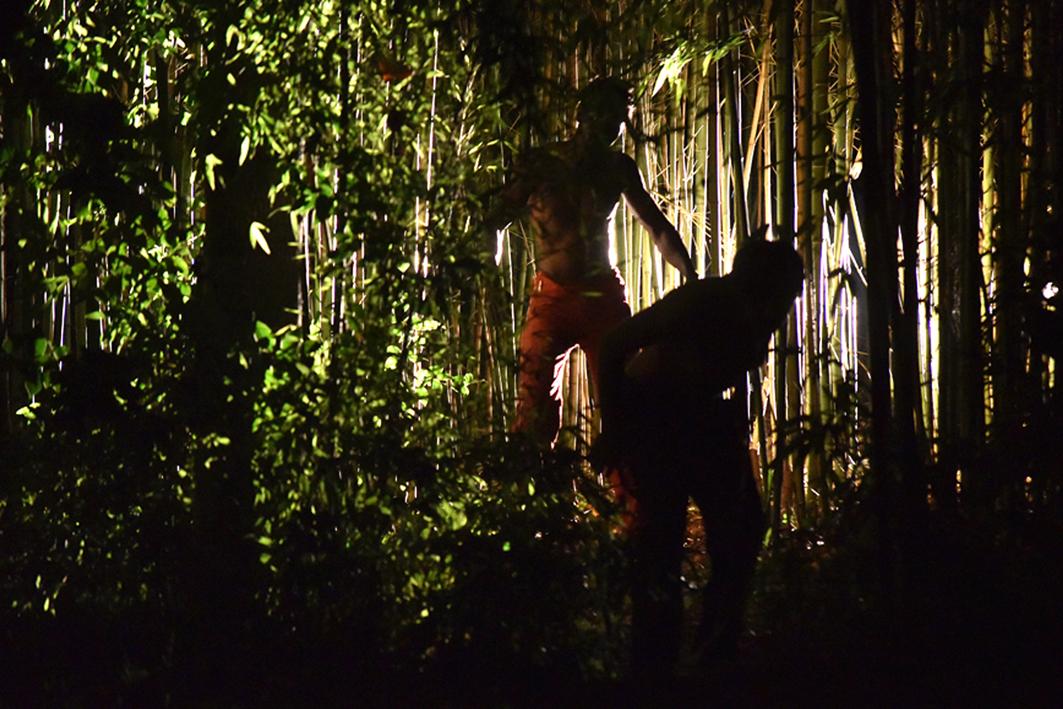 000_1098 bambù